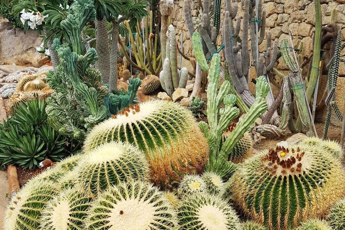 catus-giardino-esotico-pallanca